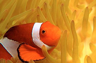 http://zivazeme.cz/images/klaun-ockaty02.jpg